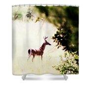 Deer 2 - Buck - White-tailed Shower Curtain