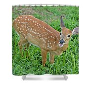 Deer 20 Shower Curtain