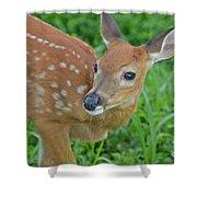 Deer 21 Shower Curtain