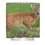 Deer 24 Shower Curtain