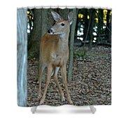 Deer 3 Shower Curtain