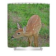 Deer 7 Shower Curtain