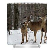 Deer Affection Shower Curtain