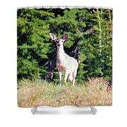 Deer Approaching Shower Curtain