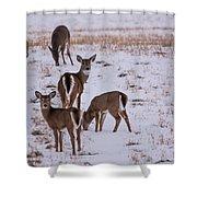 Deer At Dusk Shower Curtain