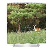 Deer At Dusk V1 Shower Curtain