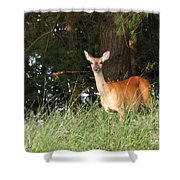 Deer At Dusk V3 Shower Curtain