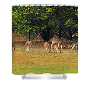 Deer At Play Shower Curtain