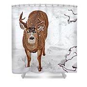 Deer Buck In Snow Shower Curtain