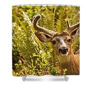 Deer Buck In Velvet Shower Curtain