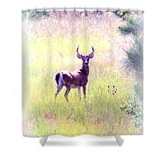 Deer - Buck - White-tailed Shower Curtain