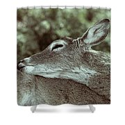 Deer Close-up Shower Curtain