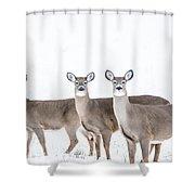 Deer Deer Deer Shower Curtain