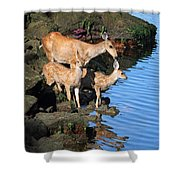 Deer Family By The Ocean At Low Tide Shower Curtain