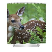 Flora And Fawna Shower Curtain
