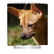Deer-head Chihuahua Shower Curtain