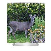 Deer II Shower Curtain