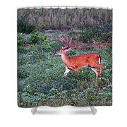 Deer-img-0113-001 Shower Curtain