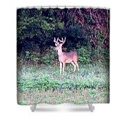 Deer-img-0122-7 Shower Curtain