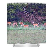 Deer-img-0128-005 Shower Curtain