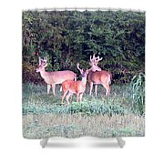 0150-004- Up To 24x17.125 Shower Curtain