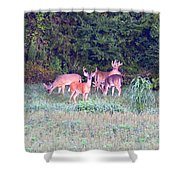 Deer-img-0156-002 Shower Curtain