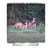 Deer-img-0158-001 Shower Curtain