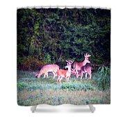 Deer-img-0158-003 Shower Curtain
