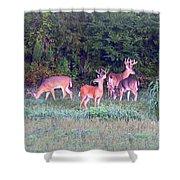 Deer-img-0160-005 Shower Curtain