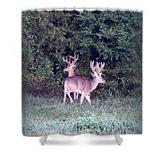 Deer-img-0177-001 Shower Curtain