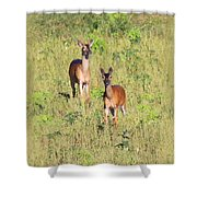 Deer-img-0283-001 Shower Curtain