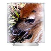Deer-img-0349-002 Shower Curtain
