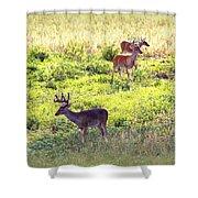Deer - 0437-004 Shower Curtain