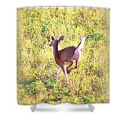 Deer-img-0456-001 Shower Curtain