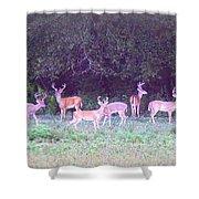 Deer-img-0470-002 Shower Curtain