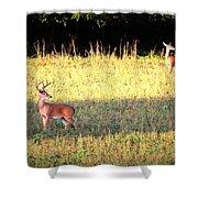 Deer-img-0627-001 Shower Curtain