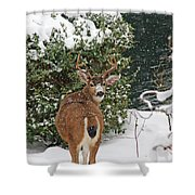 Deer In Falling Snow Shower Curtain