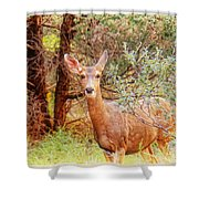 Deer In Forest Shower Curtain