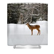 Deer In Road Shower Curtain