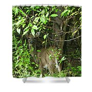 Deer In The Bushes Shower Curtain