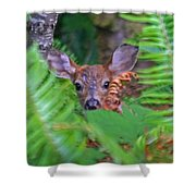 Fawn In The Ferns Shower Curtain