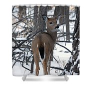 Deer In The Grove Shower Curtain