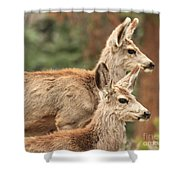 Deer In The Rocky Mountains Shower Curtain