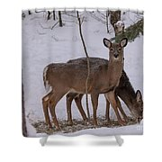 Deer In The Trees Shower Curtain