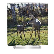 Deer Kiss Shower Curtain