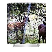 Deer Looking For Food Shower Curtain