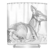 Deer Lying Down Drawing Shower Curtain
