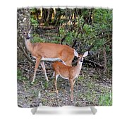 Deer Mom 2 Shower Curtain