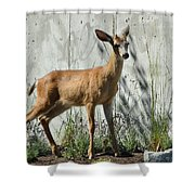 Deer On A Walkabout Shower Curtain