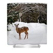 Deer On Side Of Road Shower Curtain